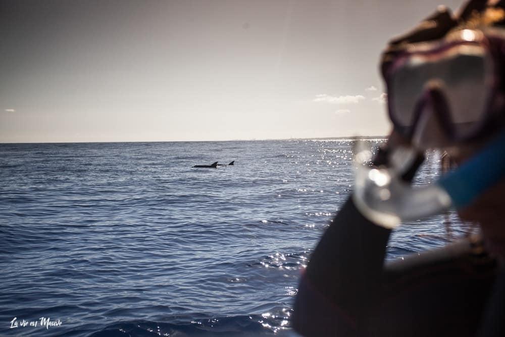 On a testé pour vous : nager avec les baleines à l'ile de la réunion